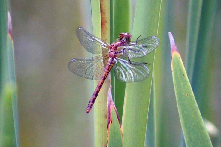 Dragonfly - A formidable flying hunter that can maneuver in six directions whilest in flight.