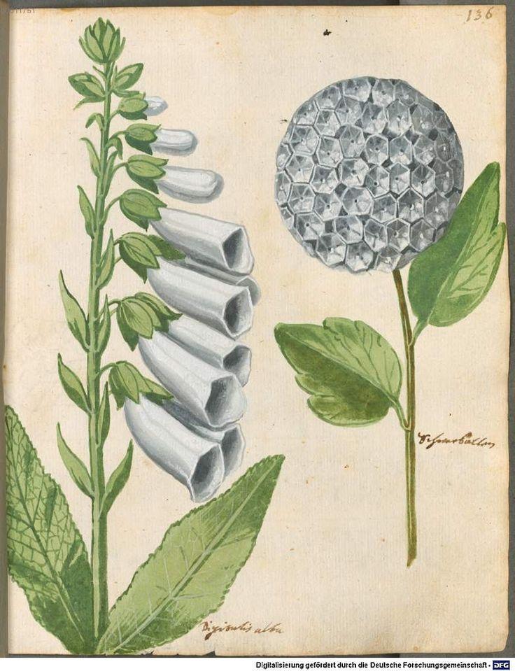 Image 00283 Hortulus Monheimensis