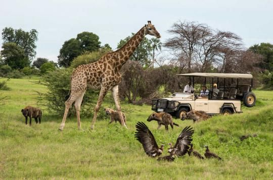 What a scenery... Game Drive at Mombo Camp (Okavango Delta, Botswana). Any questions: info@gondwanatoursandsafaris.com - we reply within 24h!