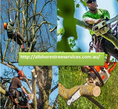 https://flic.kr/p/Qcqf6m | Tree Pruning North Ryde | All Shores Tree Services is a traditional family-owned business, which offers professional Tree Trimming services in Sydney and North Shore.   allshorestreeservices.com.au/services/tree-shrub-and-hedg...