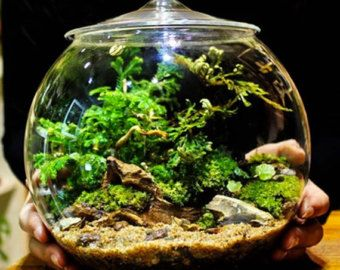 Glass Terrarium Containers for Sale | Glass Terrarium Container Bell Jars with Cover (Large) ...