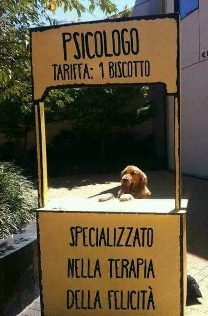 Mejores 248 Im Genes De Cani Gatti Co En Pinterest Fotos  # Muebles Gatti Rosario