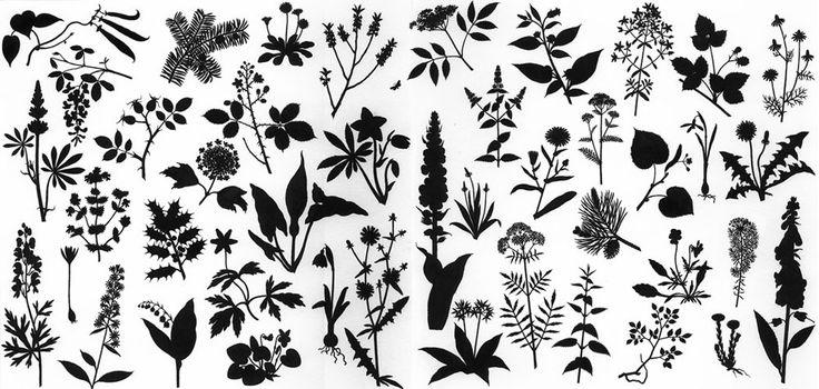 Thomas Mueller | Illustrationen | Pflanzensilhouetten