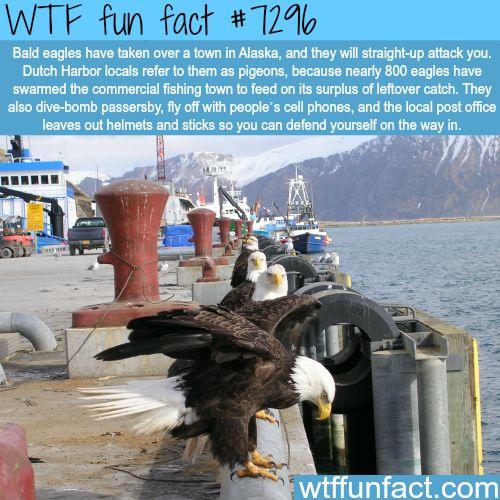 25 WTF? Yearbook Photos - Gallery | eBaum's World