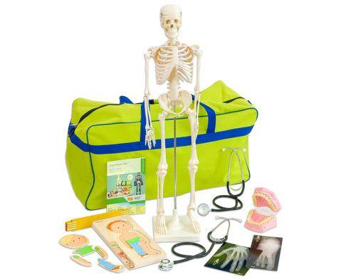 Körper-Set von #Betzold mit Skelett, 18 menschlichen Röntgenbildern, Gebiss zur Erläuterung der Zahnpflege, 2 Stethoskopen, Wachstumspuzzle und mehr #Kindergarten #Kiga #Kita #Biologie
