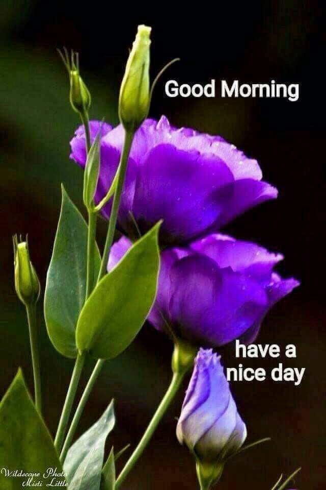 Good Morning Saturday Purple : Best good morning saturday images on pinterest