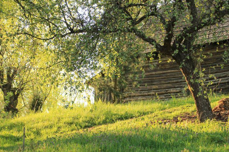 Spring in the countryside. Region of Podlasie, eastern Poland.   Images © Podlaskie Klimaty.