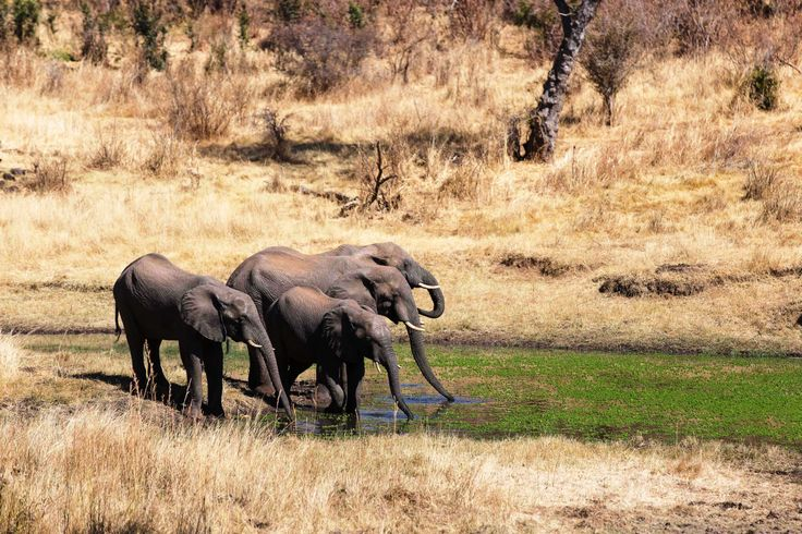 Elephants at the waterhole in front of the lodge
