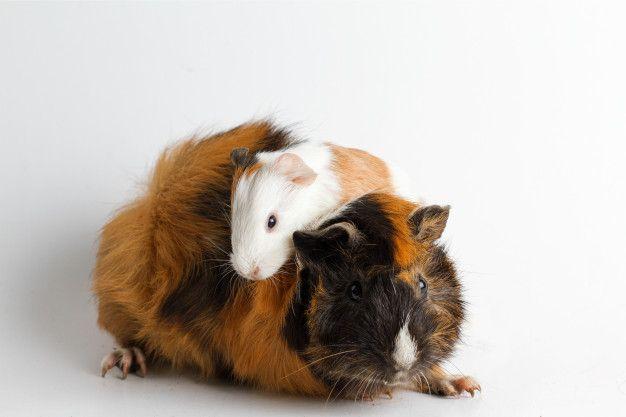 Pin Op Cute Animals
