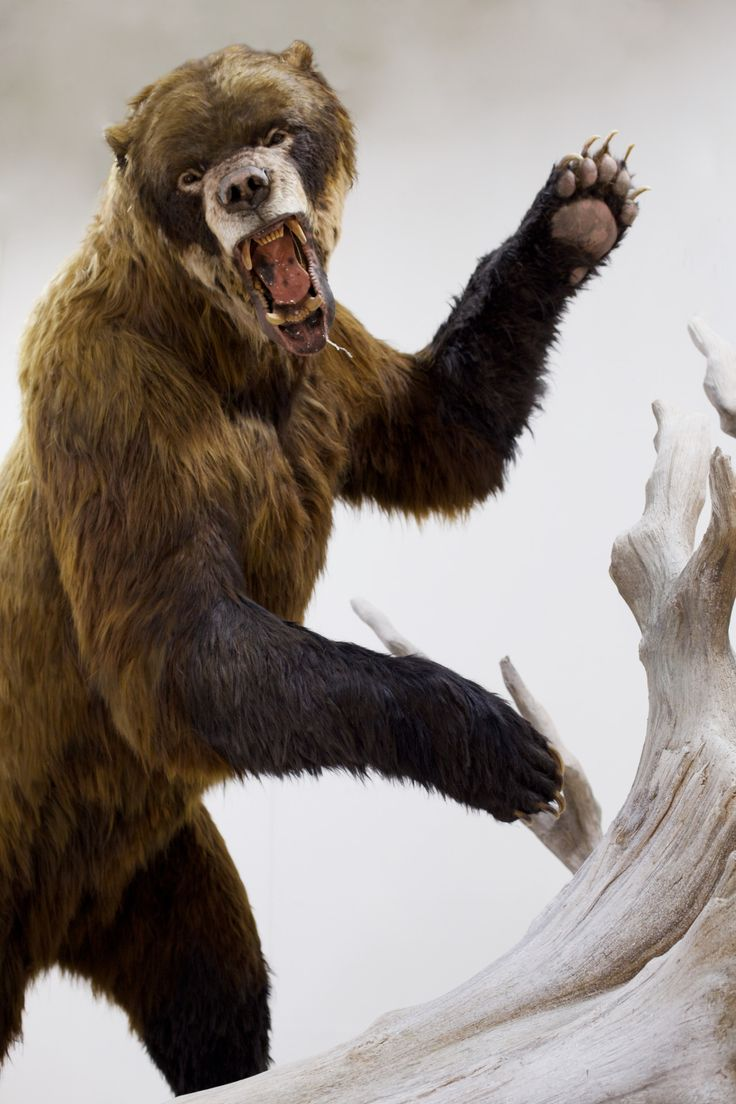 Remember that prehistoric Short Faced Bear we... - BLUE RHINO STUDIO Artistic Fabrication and Design
