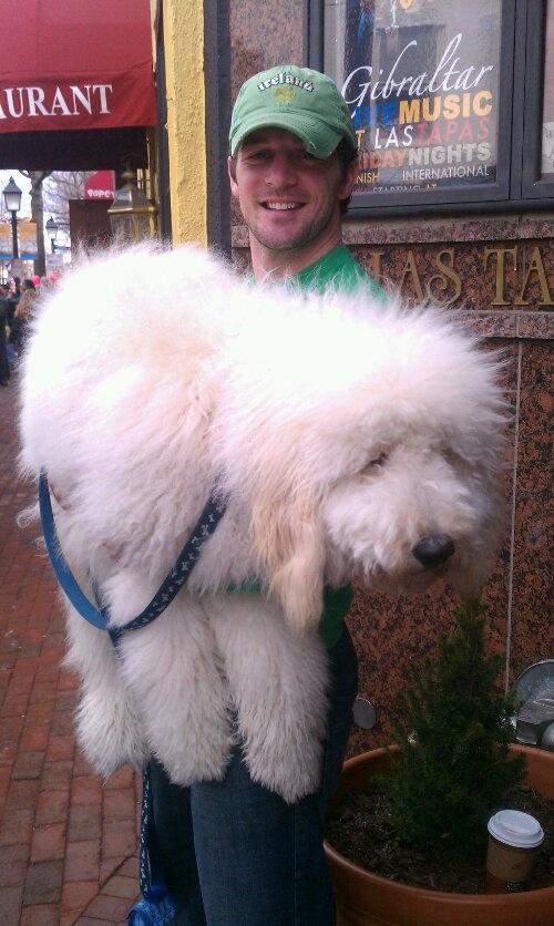 Meet Jack! Our F1B Standard Goldendoodle  https://jaqx.wordpress.com/