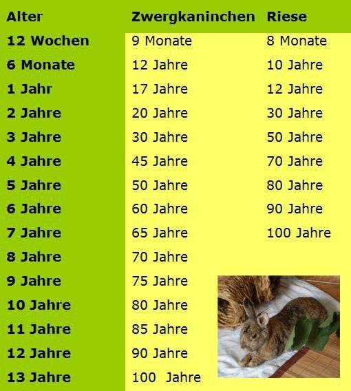 Wie alt werden Kaninchen im Durchschnitt? – Gesundheit, Haltung, Kaninchen, Pflege, Unkategorisiert, Unterhaltung