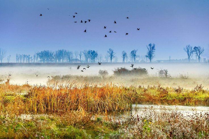 Aflată la aprox 30 de kilometrii de Bucureşti, Delta Neajlovului, intră în alcătuirea Parcului Natural Comana .În acesta gasim a treia zonă umedă din țară după Balta Mică a Brăilei și Delta Dunării şi este a doua ca biodiversitate după Deltă. De alungul vremii, aceasta s-a transformat în casa a 141 de specii de păsări și a 13 specii de pești. Parcul reprezintă o frumoasă metodă de relaxare, spre exemplu o plimbare cu barca.