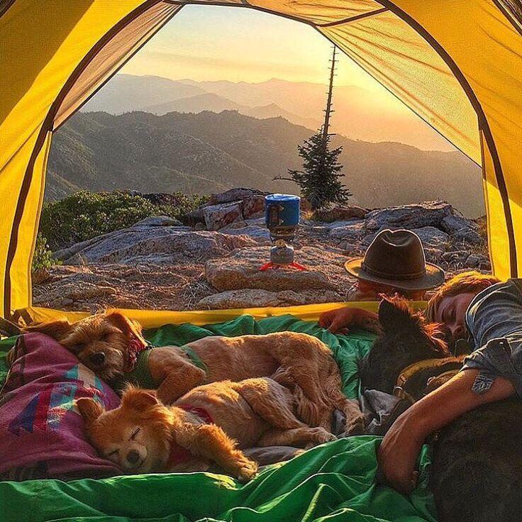 Buenos días  feliz jueves !  #PetsWorldMagazine #RevistaDeMascotas #Panama #BuenosDias #FelizJueves #MascotasPty #MascotasAdorables #Perros #PerrosPty #perrospanama #Pets #PetsLovers #dogs #DogLovers #dogoftheday #dogsofinstagram #InstaPets #InstaLove #InstaDogs #InstaCute #InstaCool #InstaGood #PicOfTheDay #Cute #SuperTiernos