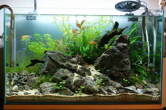 Aquascape Design Layout : One-sided, sweet layout! Great hardscape and planting ideas! More