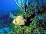 7art Tropical Fish screensaver: magical Fishes in beautiful underwater screensaver.