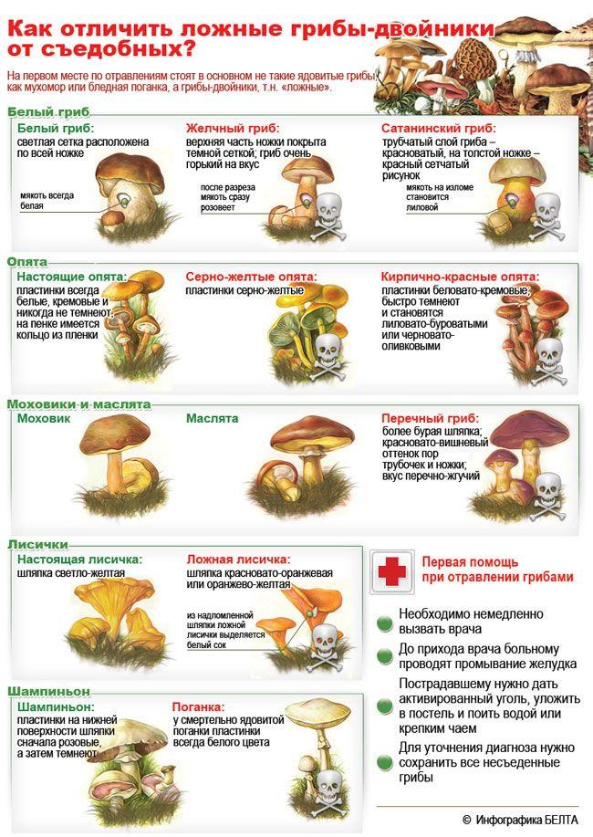 Как отличить съедобные грибы от ложных