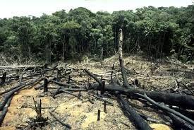 La deforestación es el término que designa a aquel proceso que implica una progresiva reducción de la masa forestal, es decir, de los bosques y plantas que están presentes en una zona. También se lo suele denominar como tala de árboles y es casi siempre la directa consecuencia de la intervención del hombre en las […]