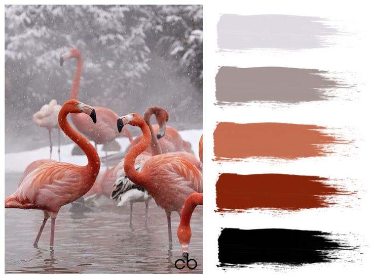 flamingo in snow