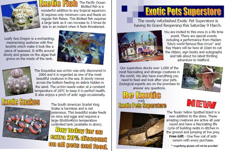 Exotic Pets Reading Comprehension - A fictional advertisement about a pet shop and comprehension questions.