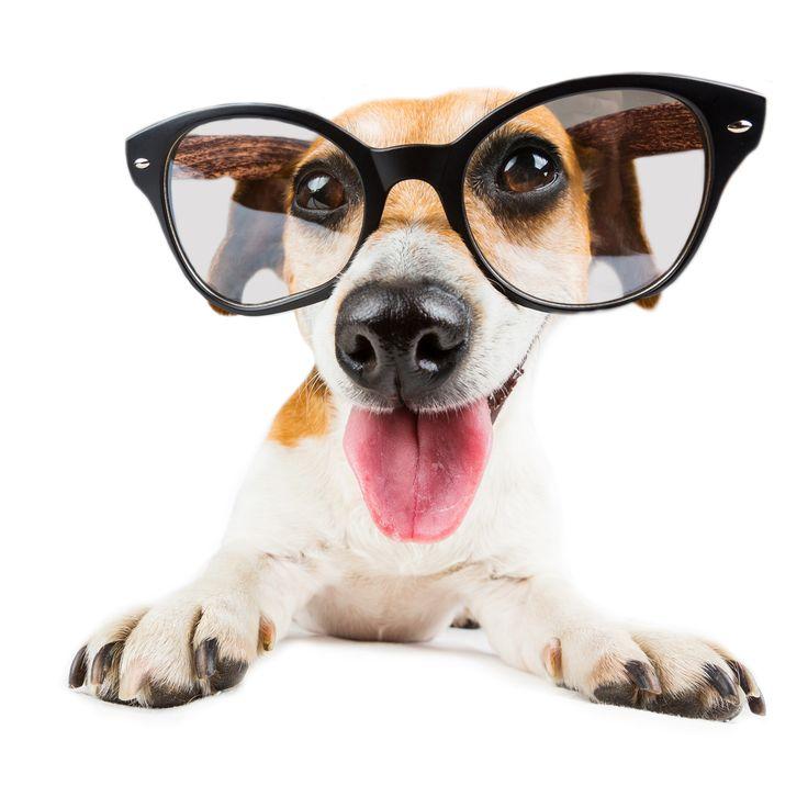 Heute habe ich mir die neuste Entwicklung von DUXIANA mal genauer angeschaut - ich kann nur sagen WOW ‼️ Mehr dazu in Kürze ☺️  #fashion #style #stylish #shopping #luxury #lifestyle #duxiana #bett #dux #bed #beautiful #instagood #fun #love #amazing #smile #look #instalike #igers #picoftheday #dogbed #dogstyle #dogpic
