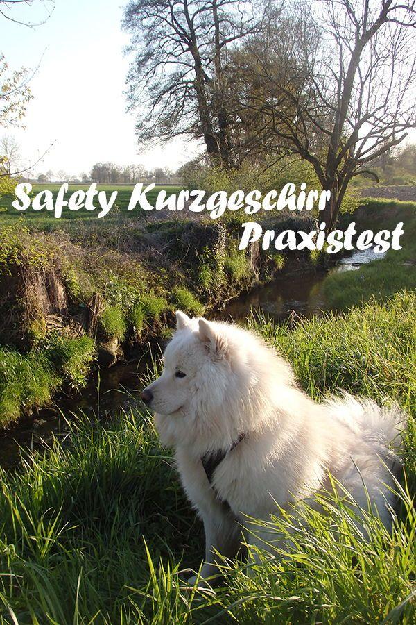 Safety Kurzgeschirr Hundegeschirr Zuggeschirr Hunde Futter