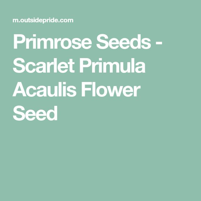 Primrose Seeds - Scarlet Primula Acaulis Flower Seed