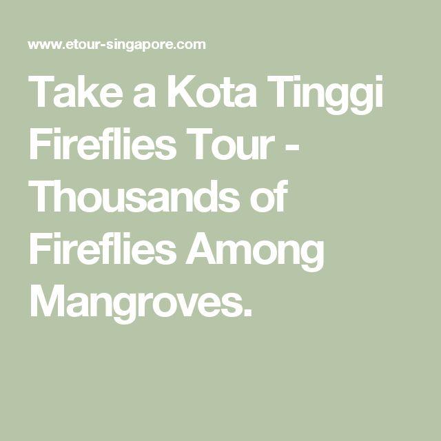 Take a Kota Tinggi Fireflies Tour - Thousands of Fireflies Among Mangroves.