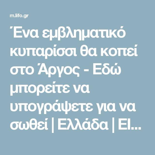 Ένα εμβληματικό κυπαρίσσι θα κοπεί στο Άργος - Εδώ μπορείτε να υπογράψετε για να σωθεί | Ελλάδα | ΕΙΔΗΣΕΙΣ | LiFO