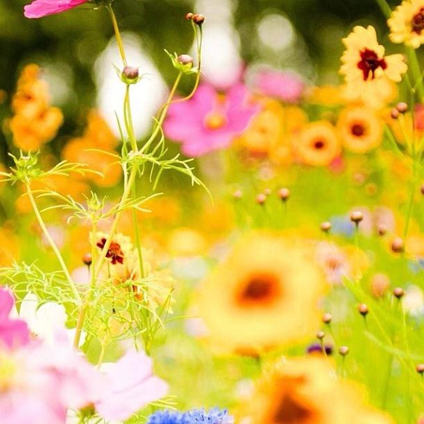 Wish you a happy day! - @dijinh- #webstagram