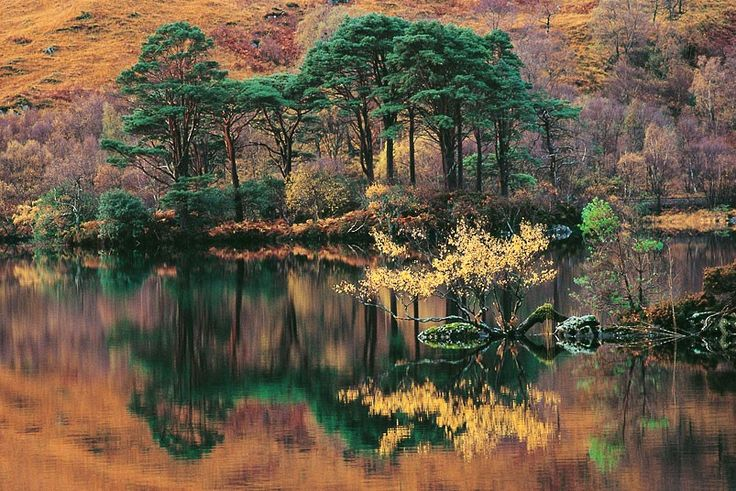 Autumnal foliage along Loch Eilt by Glenfinnan  Picture: Max Milligan