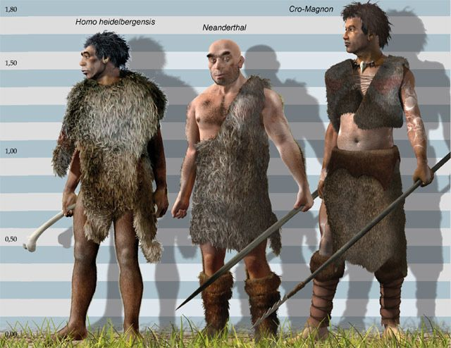 The researchers have found that Homo heidelbergensis was only slightly taller than the Neanderthal (SINC / José Antonio Peñas)