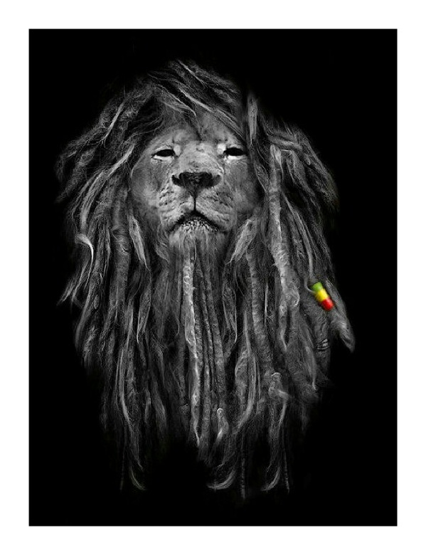 Wallpaper Rasta Lion