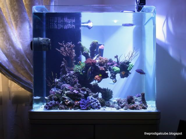17 best images about aquascaping on pinterest bonsai for Google fish tank mrdoob