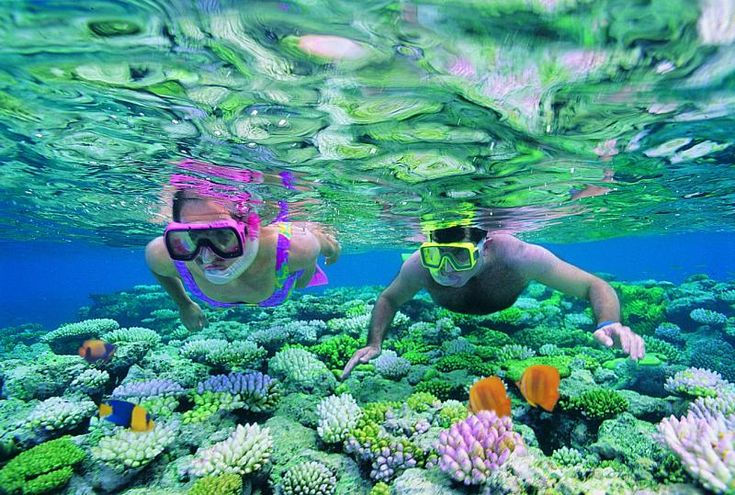 snorkelling in the great barrier reef. Just one of the many activities on todays feature down under