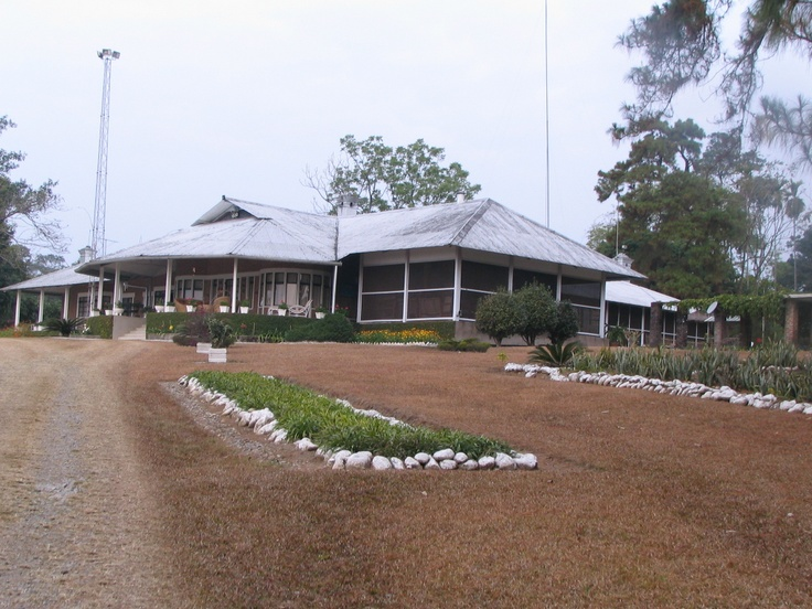 """Long view of the Corramore Tea Estate burra bungalow. Courtesy Devi Bhuyan. Devi's note: """"Corramore was known for its Pine trees and rose beds. Alas, the pine trees are dying and one of the rose beds has been covered."""""""