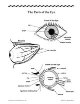 This diagram labels the parts of the human eye. #senses #humanbody #science #vision