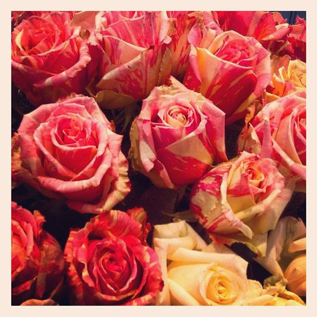 Party Roses display at Proflora 2013 in Bogotá. If you love flowers you should come to visit us www.Going2Colombia.com