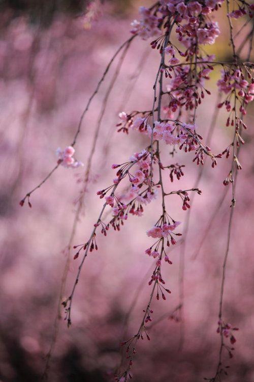 Autumn's Purple Haze