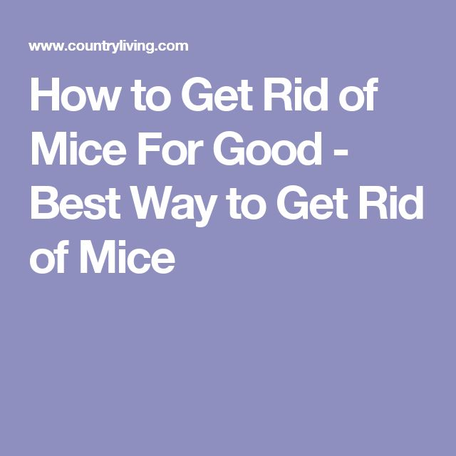1000 Ideas About Getting Rid Of Mice On Pinterest Mice Repellent Getting Rid Of Rats And
