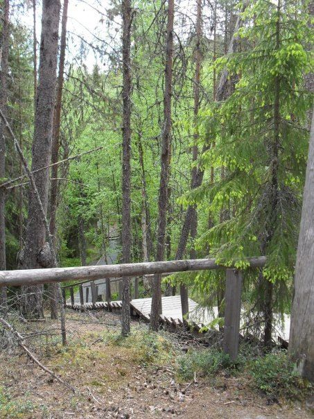 Oulanka National park. Trail to Kiutaköngäs.