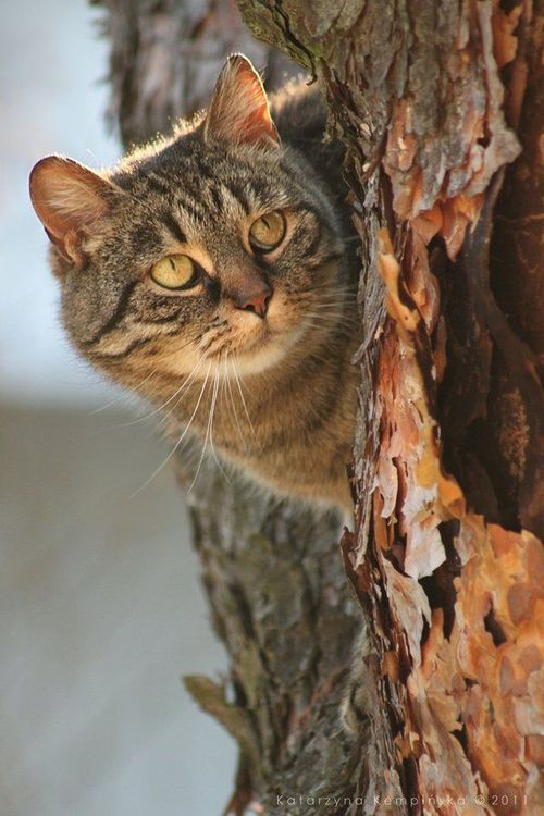cat in a tree / Cat Portraits