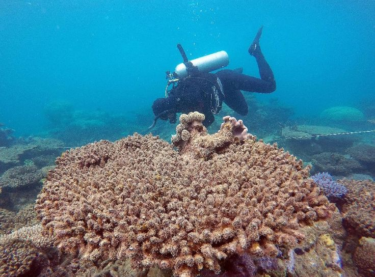 "The 2,300-kilometre (1,400-mile) long reef -- the world's biggest -- suffered its most severe bleaching in recorded history, due to warming sea temperatures during March and April, with the northern third bearing the brunt.  ""Most of the losses in 2016 have occurred in the northern, most-pristine"