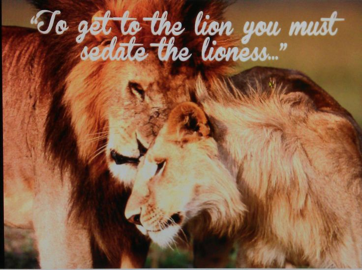 lion and cub relationship problems