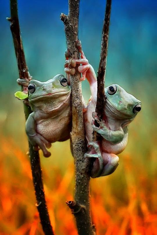 675 best Frog Stew images on Pinterest | Amphibians, Frogs ...