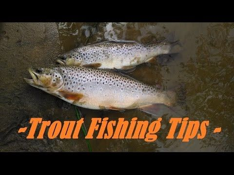 Trout fishing w night crawlers live bait tips tricks for Trout fishing techniques