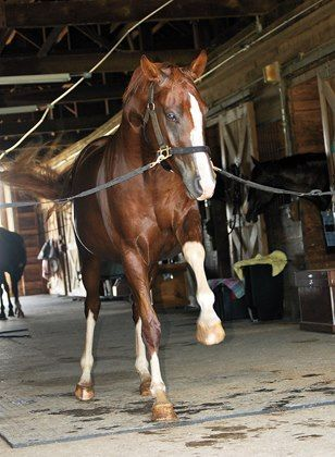 How Can I Stop a Horse from Striking? - TheHorse.com | What can be done to correct a horse that strikes at the ground, stall, water tank, and fence? #horses #behavior