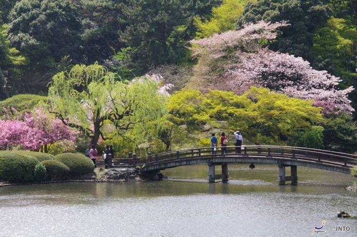 Photo Credit: Tokyo Tourism board