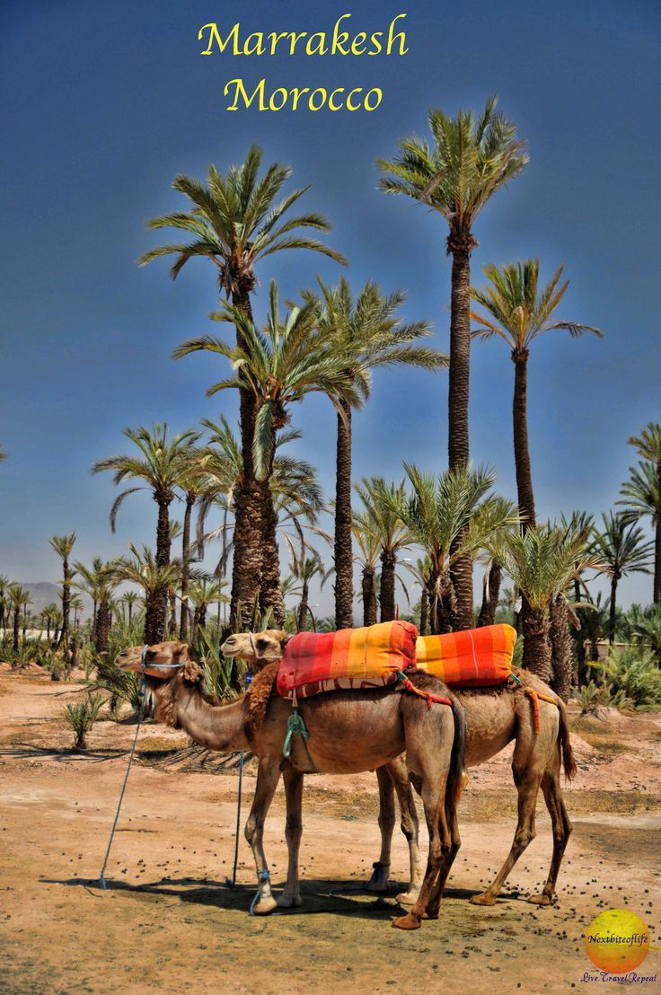 Marrakesh, as exotic as you picture it - go visit! Post & Podcast - Nextbiteoflife What to do in Marrakech.