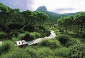 The Overland Track, TAS, And yes, it does look exactly like this. Stunning. But don't be deceived by the comfy looking path. Peril!